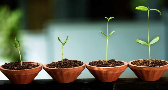 Far crescere una startup