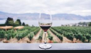 settore vino