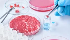 Tra i cibi del futuro potremmo trovare la carne sintetica
