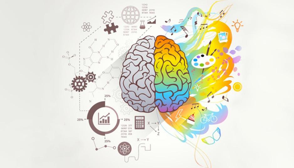 Cervello tra emozione e ragione