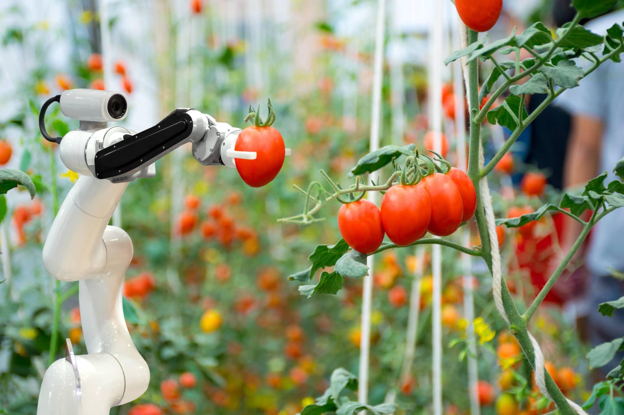 digital transformation food& beverage robot picking tomatoes
